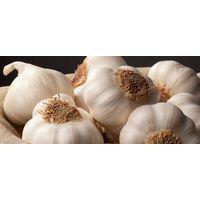 Porcelain Seed Garlic - Organic Seed Garlic for Sale