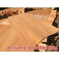 1270640mm 1.7mm Eucalyptus from KEGO factory