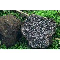 supply wild black&white truffle