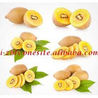 Fresh Golden New crop Kiwi fruits Price, red Kiwi exporter from china