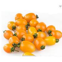 tomato seeds for plant quality yellow orange color tomato seeds