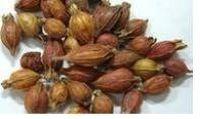 glossy privet fruit extract (Fructus Ligustri Lucidi)