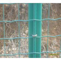 euro fence (TIANRUI)