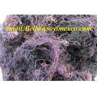 dried gracilaria seaweed (skype : fiona sovimex)