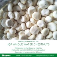 IQF Frozen Whole Water Chestnuts/Frozen IQF Frozen Water Chestnuts Wholes