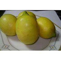 Eureka Lemon, Fresh Lemon, Anyue Lemon thumbnail image