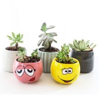 Ceramic Succulent Plant Refrigerator Sticker Bonsai Magnet Creative Plant Home Wall thumbnail image