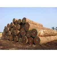 African Hardwood Timber / Logs /Lumber thumbnail image