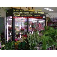 fresh flower showcase/display cooler thumbnail image