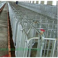 Pig breeding Strengthened gestation crates with trough