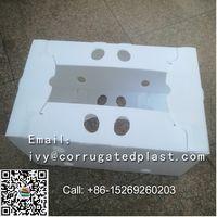 RECYCLABLE PLASTIC CORN BOXES,plastic storage boxes thumbnail image