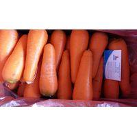 Vietnam Carrot