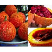 GAC Super Fruit