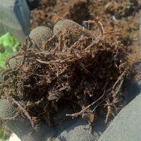 Shredded Steel Wire Scrap thumbnail image