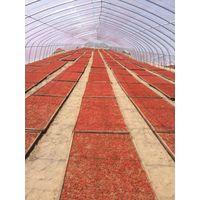 Dried Goji Berry Supply from Ningxia, China