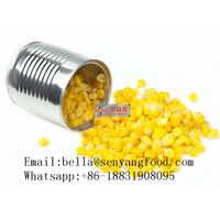 Organic Canned sweet baby corn Fresh Canned Sweet Corn/Canned Corn Kernels