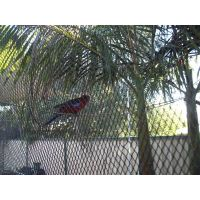 Anti bird netting thumbnail image