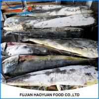 Frozen fresh fish suppier saury