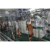 Halal frozen cattle carcass