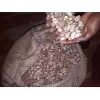 New arravalrs cashew nuts
