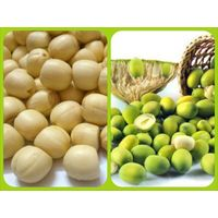 BEST PRICE LOTUS SEED