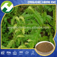 Flavone Bodybuilding Amentotaxus argotaenia Herb Extract