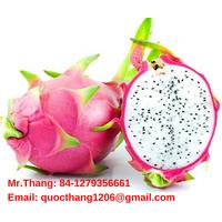 100% Fresh Dragon Fruit from VIETNAM thumbnail image