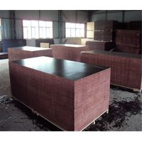 Hot sale melamine glue black film faced plywood