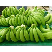 Best Quality Organic Cavendish Bananas