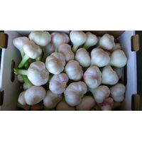 garlic.. thumbnail image