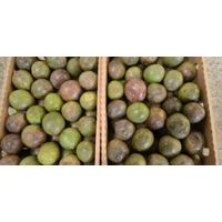 Passion Fruit, Best quality, Best Price