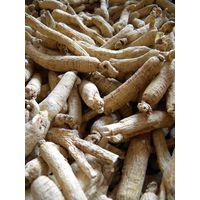 Ginseng root/ Panax Ginseng C.A.Meyer