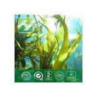 Brown Algae Extract Fucoidan 85% thumbnail image