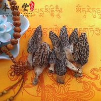 Fresh freezing or dry Toadstool/Morel/Morchella vulgaris from Sichuan province.
