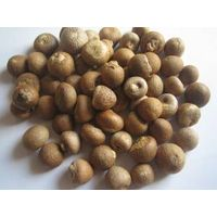 Betel Nuts - Whole Dried 70% - 75% thumbnail image