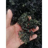 chondrus crispus irish moss seamoss thumbnail image