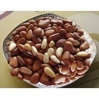 Chinese New & Organic Pine Nut thumbnail image