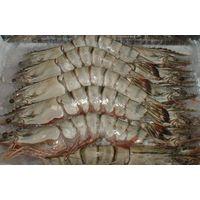 Live Shrimps thumbnail image
