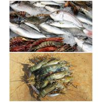 Sea Food Supplier