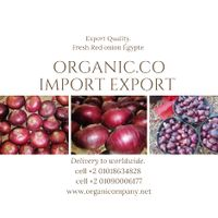 Wholesale Fresh Red and Yellow Onion / Fresh Onion Exporter thumbnail image