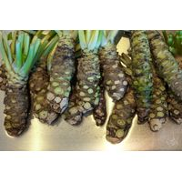 Wasabi Roots For Sale thumbnail image