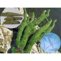 2017 Skin Care Freshwater Sponge Extract