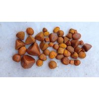 COW GALLSTONE & OX GALLSTONES thumbnail image