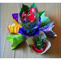 Decorative Flower Pot Coat for Green Plants and Flowers