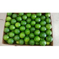 Fresh seedless lime (84)1669868008