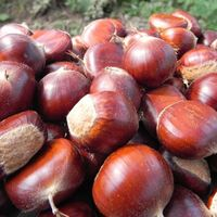 Chestnuts thumbnail image