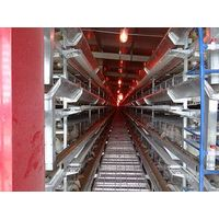 Automatic Layer Chicken Cages