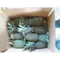 Pineapple with Wonderful flavour and Best Price