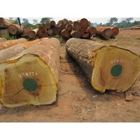 quality sapele wood logs and swan for sale