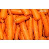 2015 Chinese fresh vegetables &fruits crispy sweet carrots